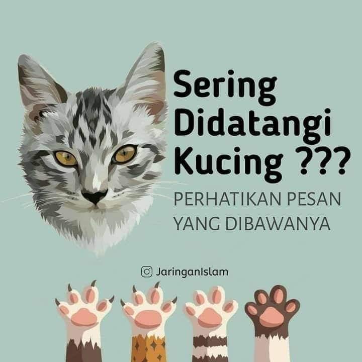 Jangan Usir Kucing ketika Mendekati Anda !!